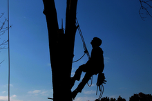 Rock Hill Tree Service